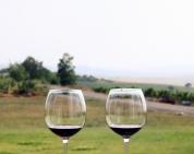 cupele vinului