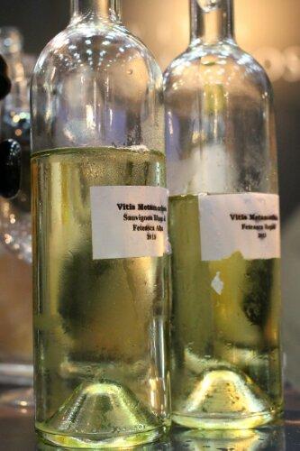 vinuri Vitis Metamorphosis