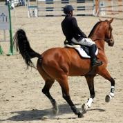 sarituri de cai