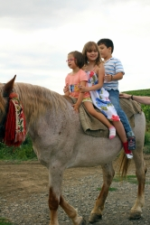 un cal cu trei calareti