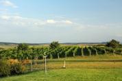 peisaj viticol