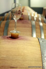Pinot Noir in baricuri
